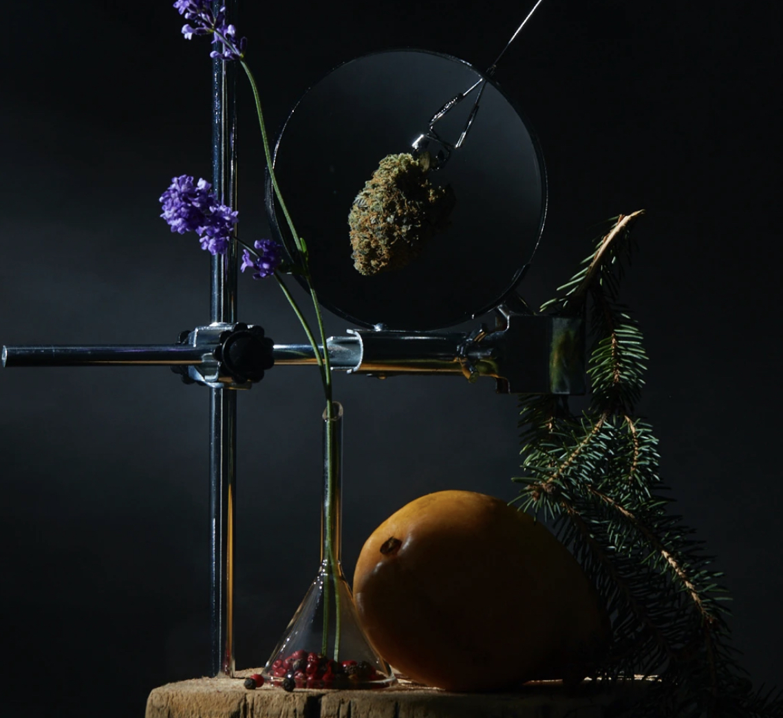 flower art and science cannabis campaigns we love
