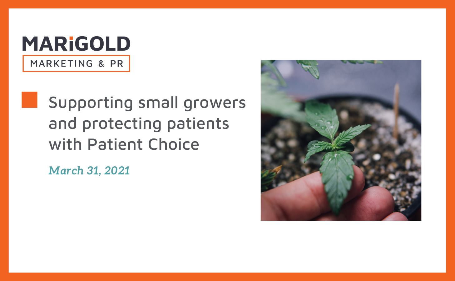supporting growers and protecting patients with patient choice